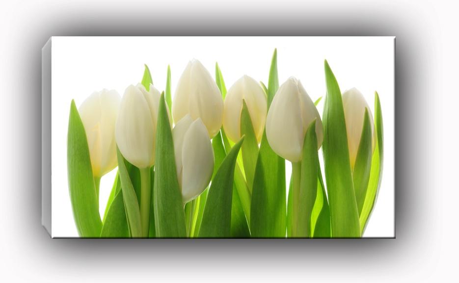 Dekor Szklany Do Kuchni I łazienki Białe Tulipany Ecru