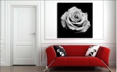 Obraz canvas B&W ROSE