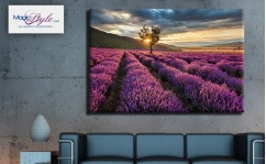 Obraz canvas LAVENDER SUNSET II