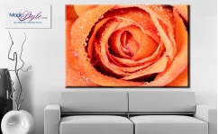 Obraz canvas ORANGE ROSE