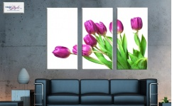 Obraz canvas tryptyk TULIPS ON WHITE